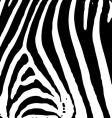 Zebra print vector | Price: 1 Credit (USD $1)