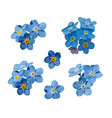 blue forget me not spring flowers decorative vector image