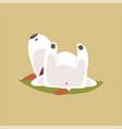 jack russell puppy character sleeping on his back vector image vector image