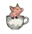 little pig in coffee cup color sketch engraving vector image vector image