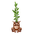 office plant in a ceramic pot in the shape of an vector image vector image