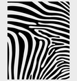 skin zebra 2 vector image