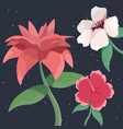 three flowers tropical nature botanical decoration vector image