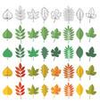 set woody leaves vector image vector image