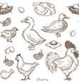 chicken and ducks sketch pattern background vector image