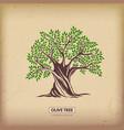 olive beautiful tree vector image