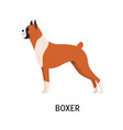 boxer gorgeous docked and cropped dog with short vector image