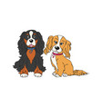 cavalier king charles spaniel dog breed vintage vector image vector image