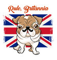 english bulldog with mustaches and monokle vector image vector image