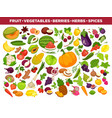 fruits vegetables berries and spices vector image vector image