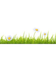 grass with white fleabane flowers vector image vector image