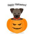 happy halloween of puppy vector image