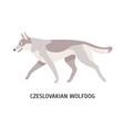 czechoslovakian wolfdog or vlcak stunning vector image vector image