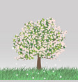 flowering spring tree vector image