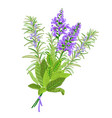 sage and rosemary flowers vector image vector image