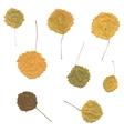 Autumn birch Betula aspen or Populus tremula vector image