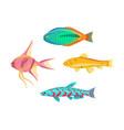 betta splendens fish types set vector image vector image