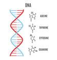 dna molecule helix spiral genetic code vector image vector image