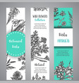 hand drawn herbs and wild flowers banners vintage vector image vector image
