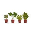 indoor house plants in flowerpots set home or vector image