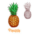 pineapple ananas fruit sketch isolated icon