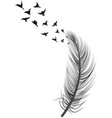 realistic feather bird vector image vector image