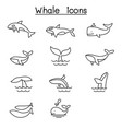 whale icon set in thin line style vector image