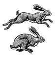 wild hares rabbits are jumping forest bunny vector image vector image