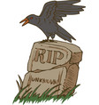 big black crow and old gravestone vector image
