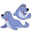 cute seals vector image
