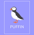 puffin bird isolated vector image vector image