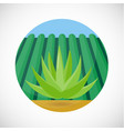 agave flat icon vector image vector image