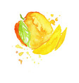 colorful hand drawn of mango vector image
