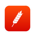 dried wheat ear icon digital red vector image vector image