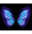 glowing butterfly wings vector image