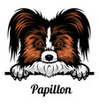 head papillon - dog breed color image a dogs vector image vector image