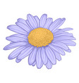 beautiful daisy flower isolated on white vector image vector image