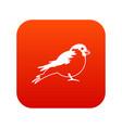 bullfinch icon digital red vector image