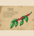 coffeehouse advertisement branch coffee beans vector image vector image