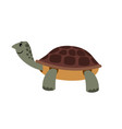 cute turtle cartoon turtle pet vector image