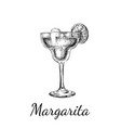 hand drawn sketch margarita cocktail drinks vector image vector image