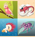 exotic pets 2x2 design concept vector image