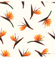 exotic tropical bright orange flowers isolated on vector image