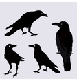 silhouette of a crows in different vector image vector image