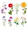 wild flowers plants botanical collection vector image