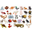 set of animal character vector image vector image