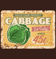vegetable farm cabbage rusty metal plate vector image vector image