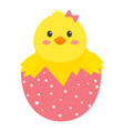 yellow chichen in pink shell with white dots vector image