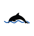 dolphin color vector image
