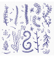 hand drawn doodle branches and decorative elements vector image vector image